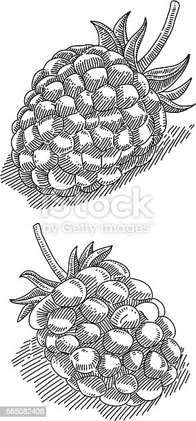 Line drawing of Raspberry and Blackberry. Elements are grouped.contains eps10 and high resolution jpeg.