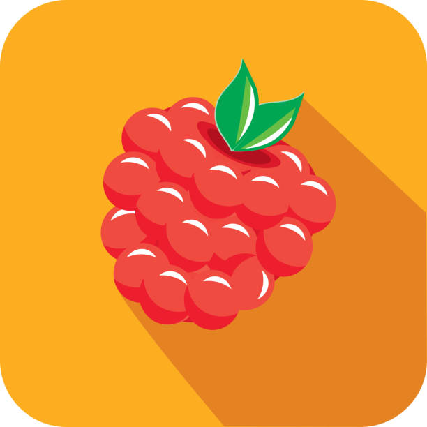 Raspberry Fruit Flat Design themed Icon with shadow vector art illustration
