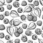 Raspberry seamless pattern. Vector drawing. Isolated berry branch sketch on white background.  Summer fruit engraved style background. Detailed hand drawn vegetarian food. Great for packaging design, tea or juice label, print