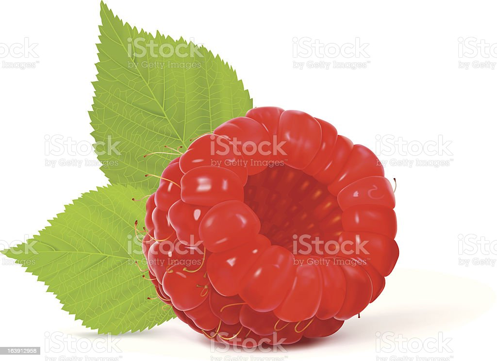 Raspberry royalty-free stock vector art
