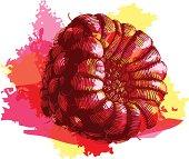 Grunge style raspberry - vector illustration
