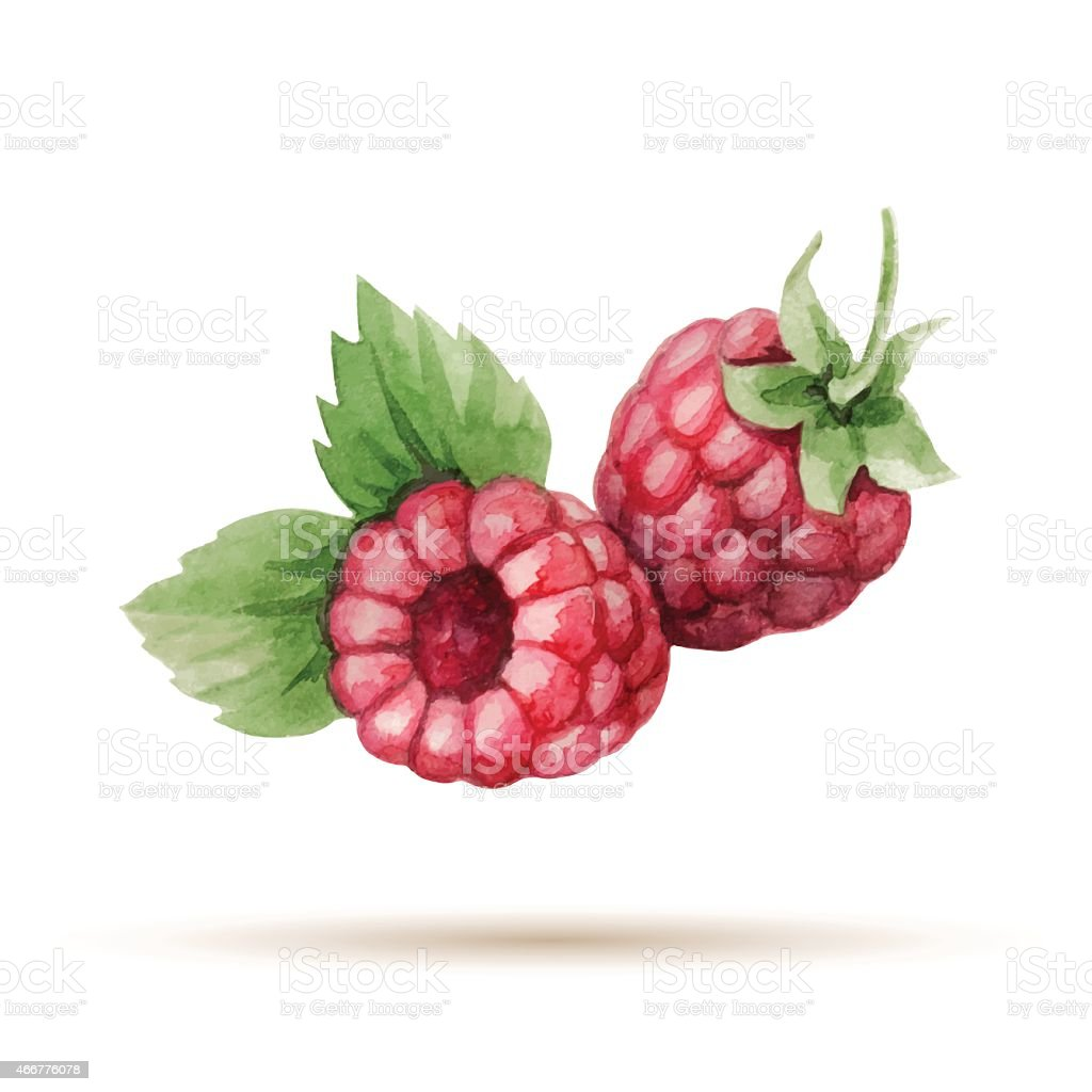 Raspberry vector art illustration