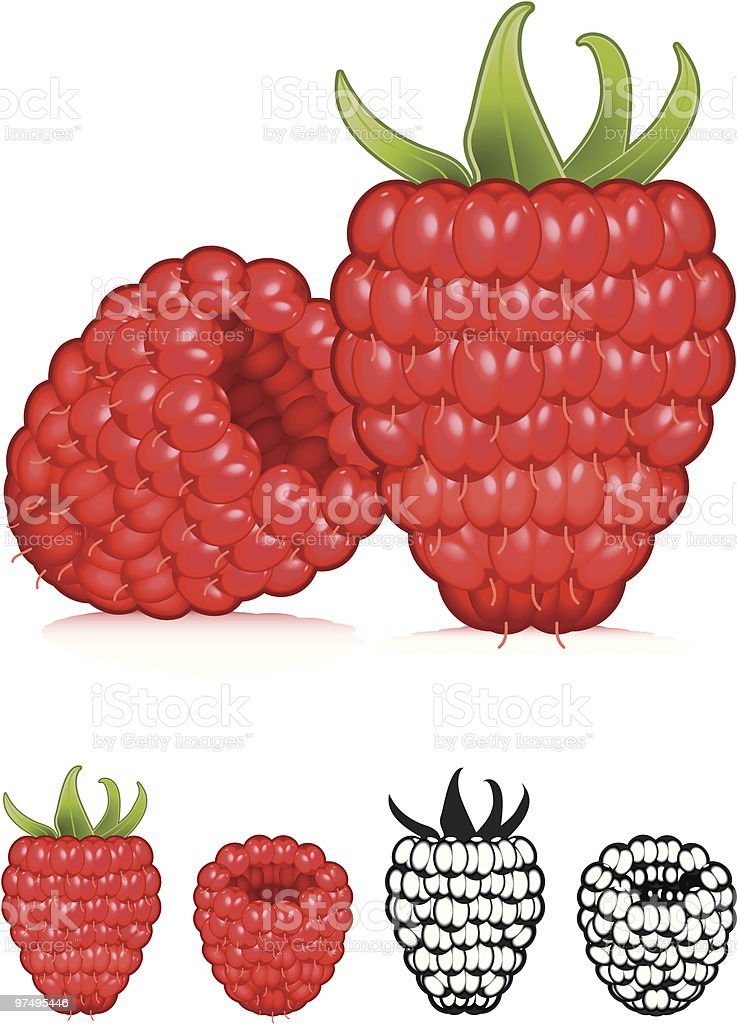 Raspberry royalty-free raspberry stock vector art & more images of berry fruit