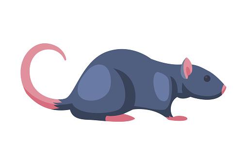 Rat Pest Animal, Home Parasite Vector Illustration on White Background
