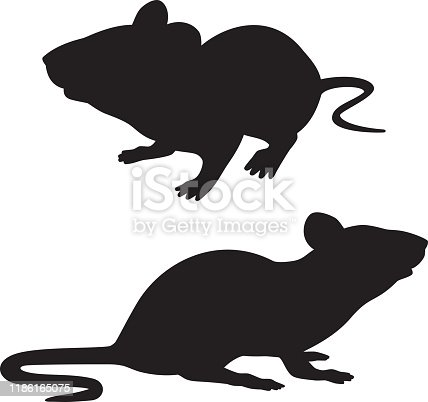 Vector silhouettes of two rats.