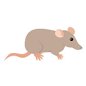 Rat. Isolated vector illustration