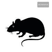 Mouse, Rat Vector. Rat Silhouette On The White Background. Rat Vector Disease. Harmful Rodent, Parasite.