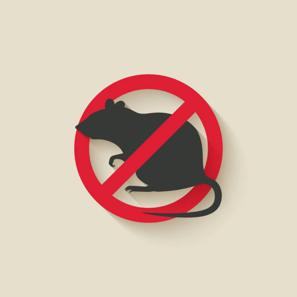 rat warning sign rat warning sign. vector illustration - eps 10 rodent stock illustrations