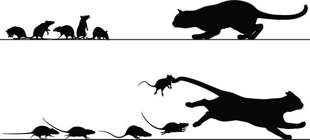 Rats Chasing Cat向量圖形及更多一群動物圖片