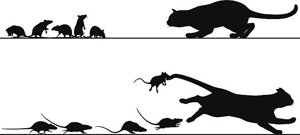 Rats chasing cat vector art illustration
