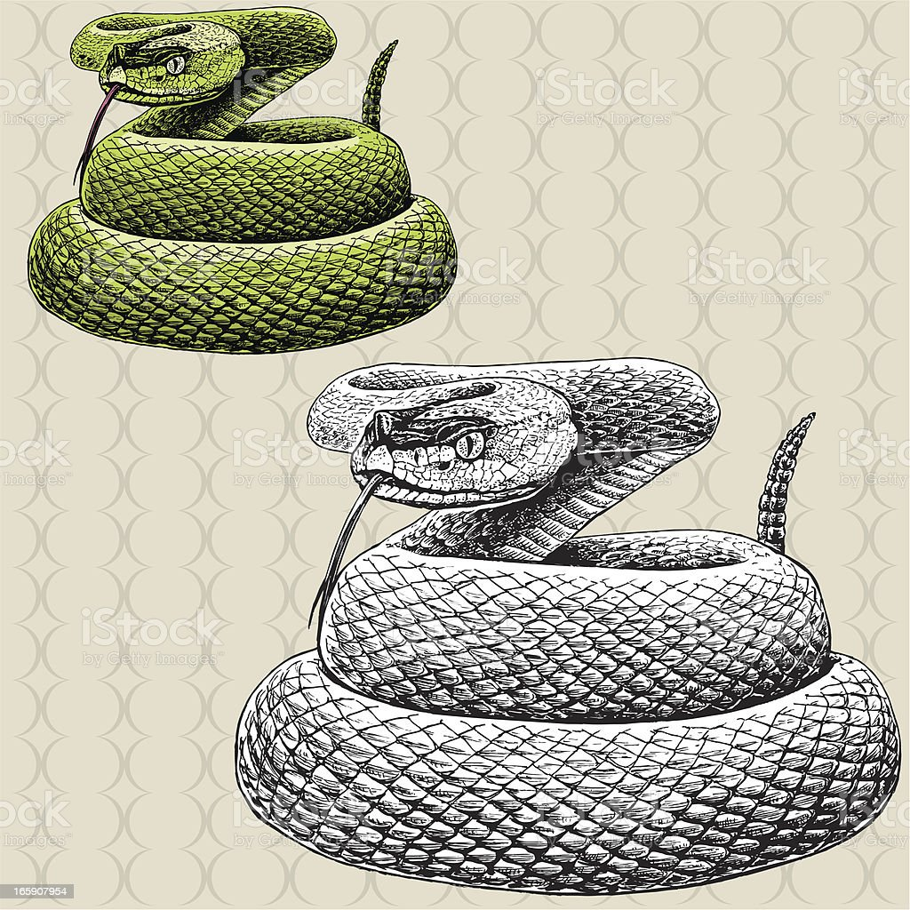 Rattlesnake Hissing - Snake vector art illustration