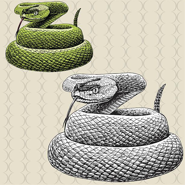 ウォータースネークラトルスネークシューっと威嚇する - ヘビ点のイラスト素材/クリップアート素材/マンガ素材/アイコン素材