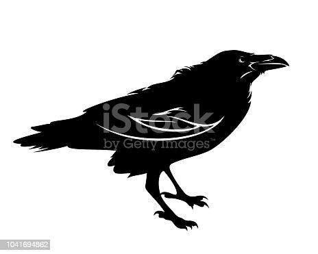 standing raven bird black and white vector outline