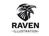 Black raven isolated on white