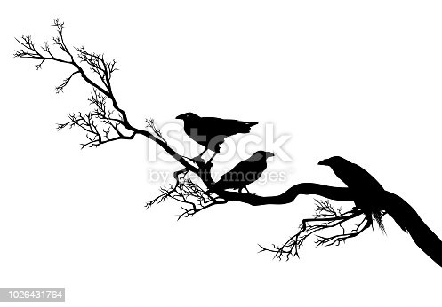 flock of ominous raven birds sitting on a leafless tree branch - black and white vector silhouette design