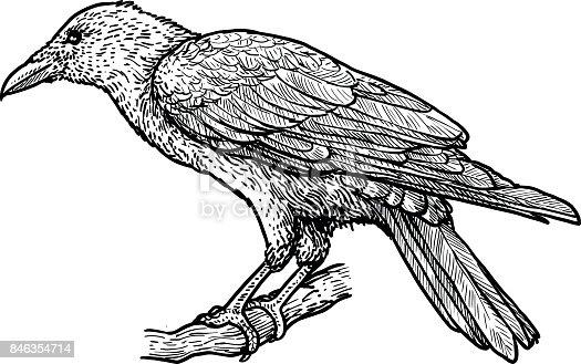 istock Raven illustration, drawing, engraving, ink, line art, vector 846354714