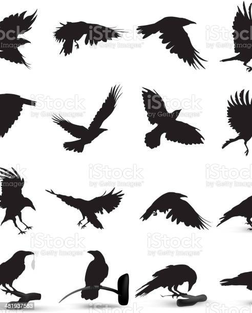Raven silhouette vector id481937583?b=1&k=6&m=481937583&s=612x612&h=1tp 0g35hredvxxzhwtnxix4 ngqbih5fqrzebwji w=