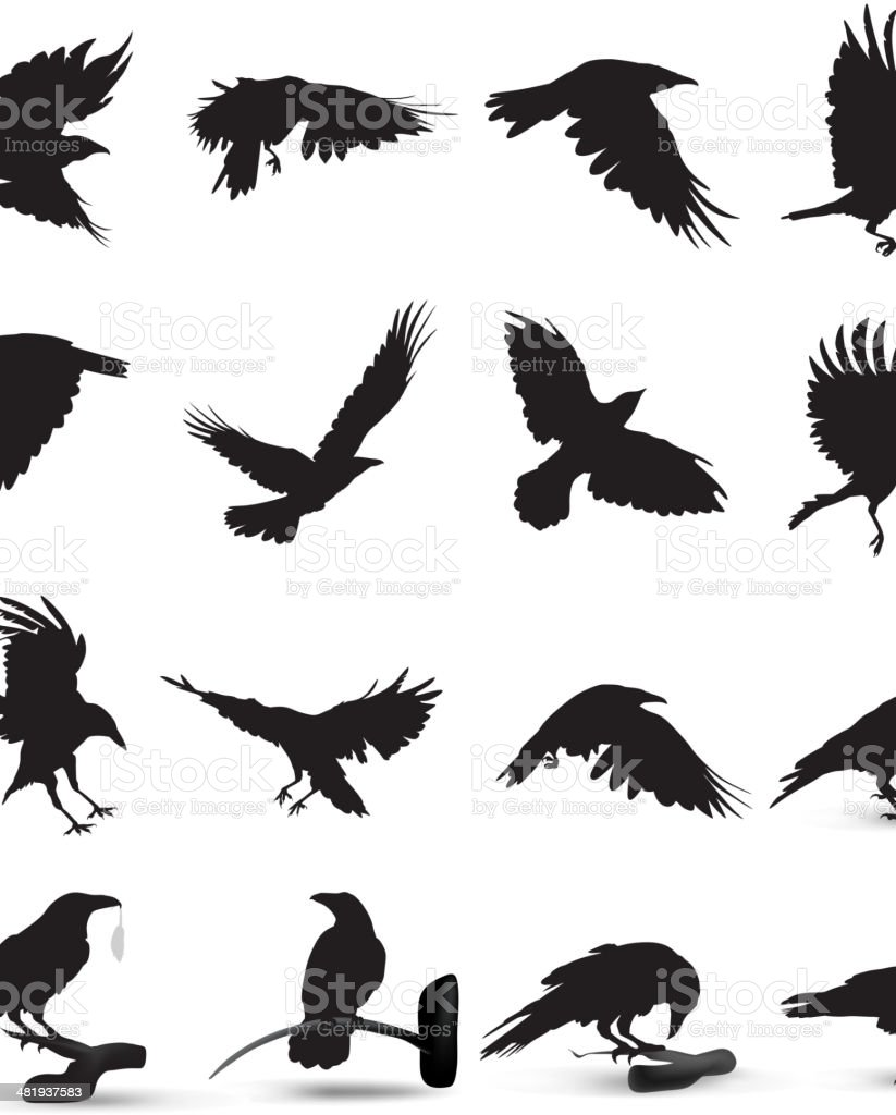 Raven Silhouette vector art illustration