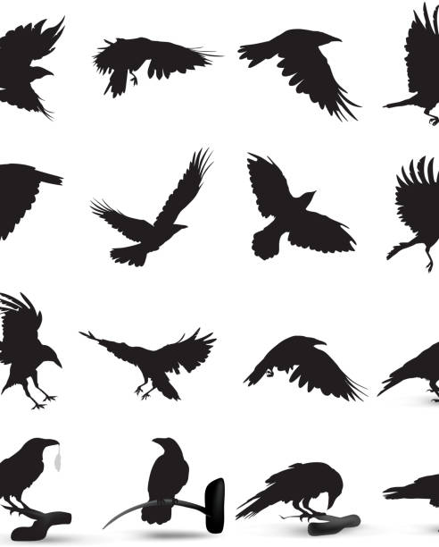 raven silhouette - birds stock illustrations