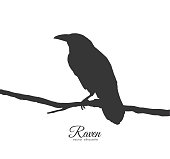 Raven sitting on branch on white background. Silhouette of bird.