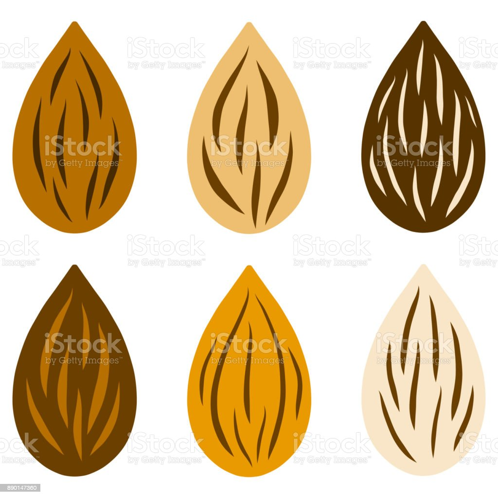 Raw almond nut set various color. Vector illustration. vector art illustration