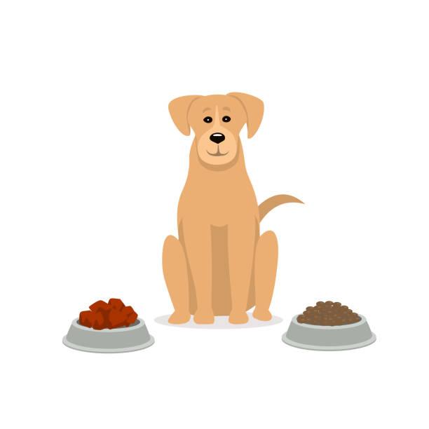 ilustrações de stock, clip art, desenhos animados e ícones de raw vs kibble  dog food  graphic - dog food
