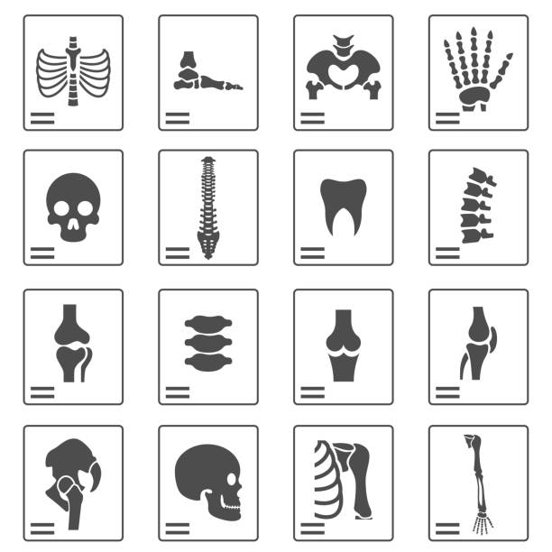 X ray icons X ray icons x ray image stock illustrations