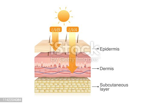 UVB rays penetrate into epidermis of skin layer and UVA deep into the dermis. Illustration about health care and medical diagram.