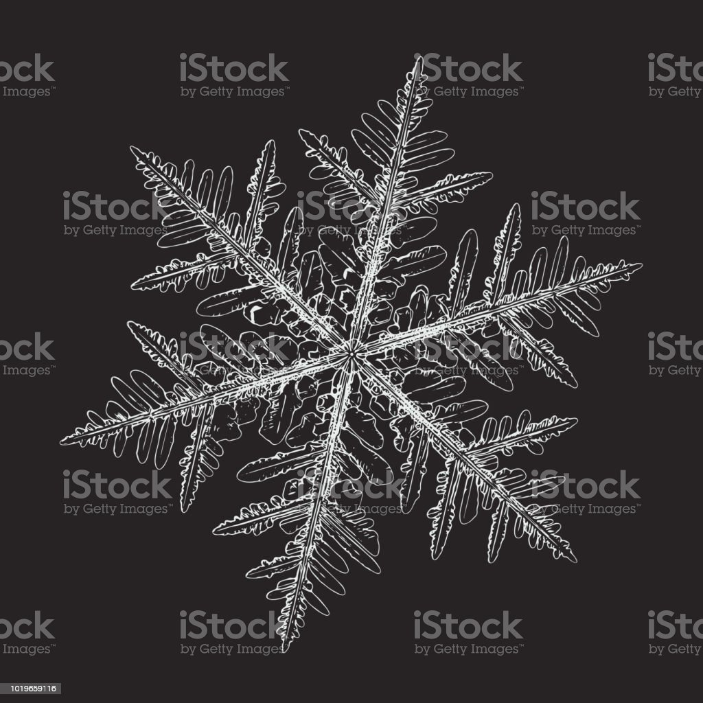 Real snowflake isolated on black background vector art illustration