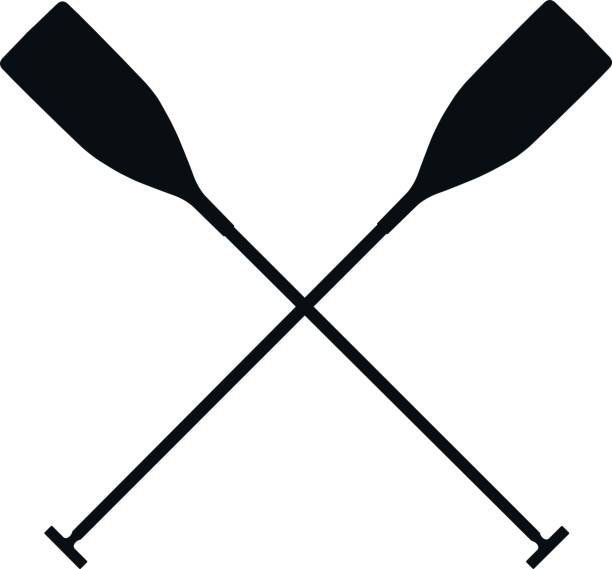 Real Sports Paddles Vector Art Illustration