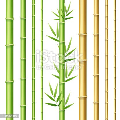 Realistic 3d Detailed Bamboo Shoots Set Eco Decorative Element Border for Web Symbol of Relax, Rest. Vector illustration