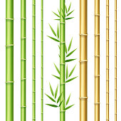 Realistic 3d Detailed Bamboo Shoots Set. Vector
