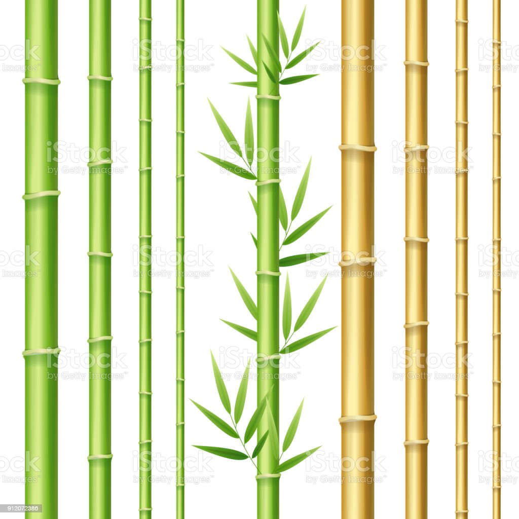Realistic 3d Detailed Bamboo Shoots Set. Vector vector art illustration