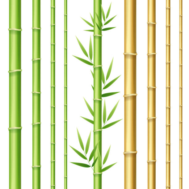 realistic 3d detailed bamboo shoots set. vector - lepki stock illustrations