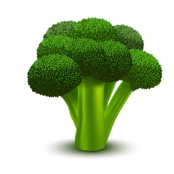 realistyczne 3d szczegółowe zielone świeże brokuły. wektor - kapustowate stock illustrations
