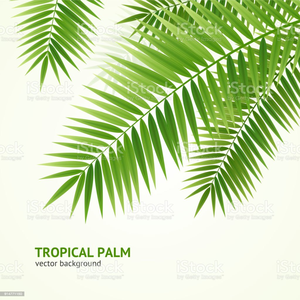 Realistic 3d Detailed Green Palm Tree Background Card Vector Stock