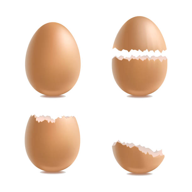 stockillustraties, clipart, cartoons en iconen met realistische 3d gedetailleerde verschillende close-up shell eieren set. vector - egg