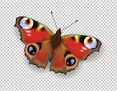 Realistic 3d Peacock butterfly. Colorful bright detailed mesh vector illustration with shadow on transparent background. Spring summer banner decoration