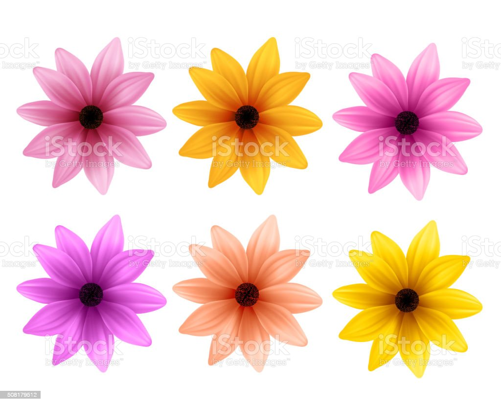 Realistic 3D Set of Colorful Daisy Flowers for Spring Season vector art illustration
