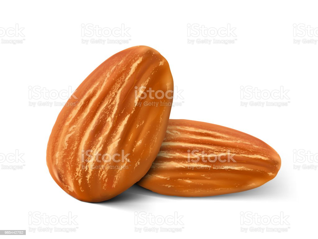 Realistic almond nuts isolated on white background. vector art illustration
