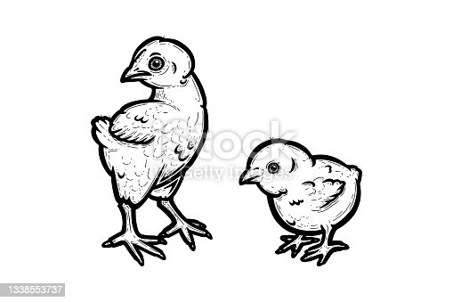 istock Realistic baby chickens outlined in white background. Free grazing chicks in the runch. Vector illustration 1338553737