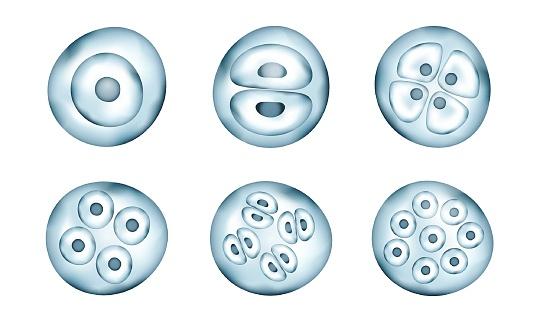 Realistic bacteria