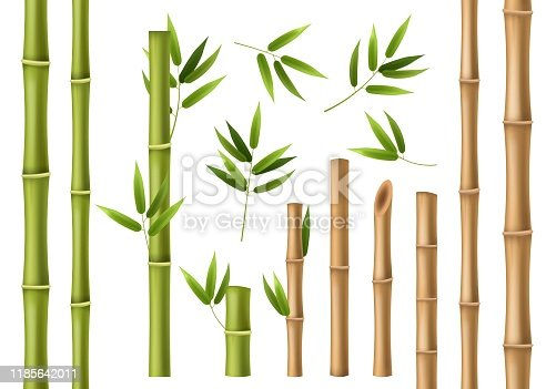 Realistic bamboo. Green and brown bamboo stems with leaves, asian forest 3d vector isolated china and japan decoration abstract chinese elements