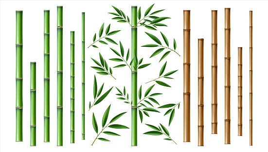 Realistic bamboo stick. Brown and green tree branch and stems with leaves isolated decorative closeup elements, east forest trees, exotic botanical decor, eco material vector 3d set