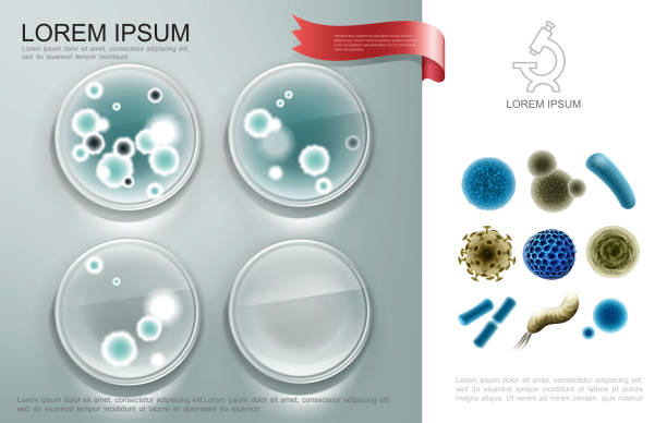 Realistic Biological Microorganisms Composition Realistic biological microorganisms composition with bacterial cells on petro dishes and different viruses and germs vector illustration petri dish stock illustrations