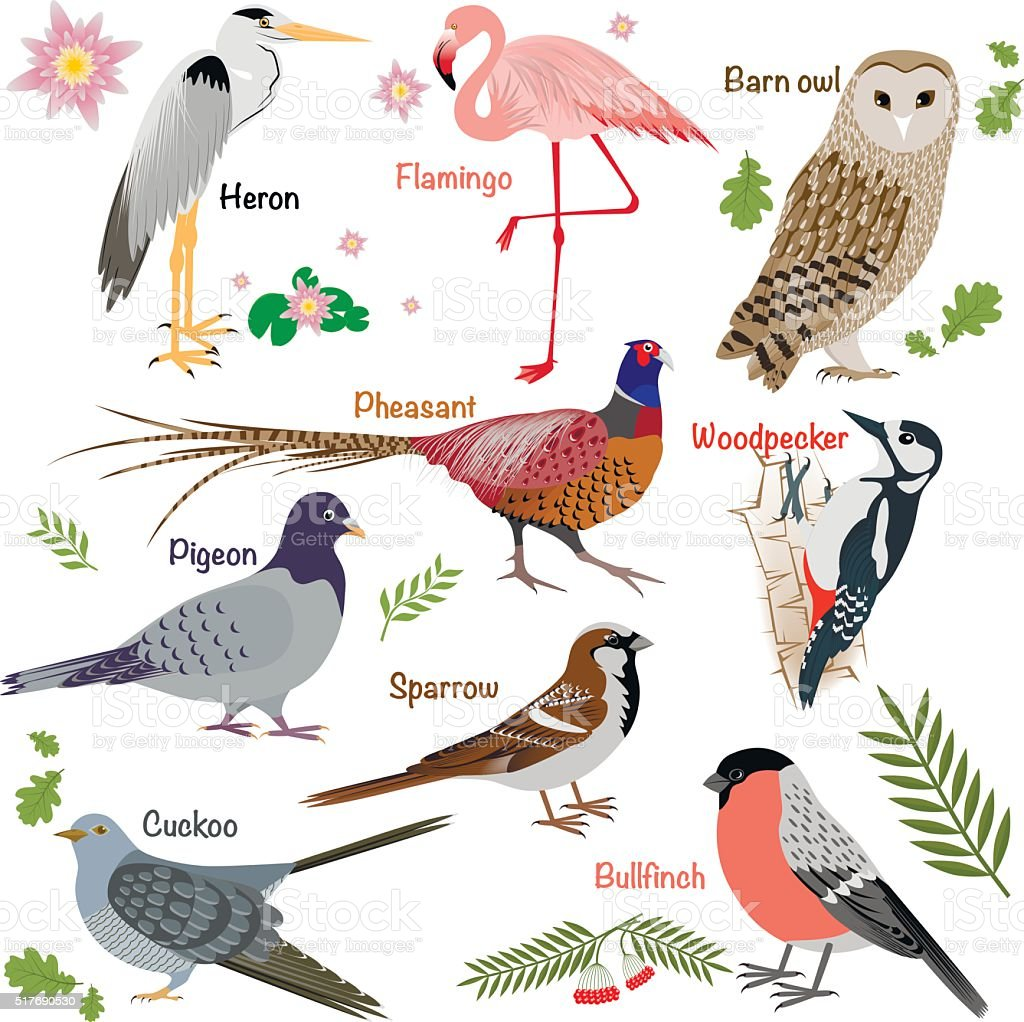 Realistic birds collection vector art illustration