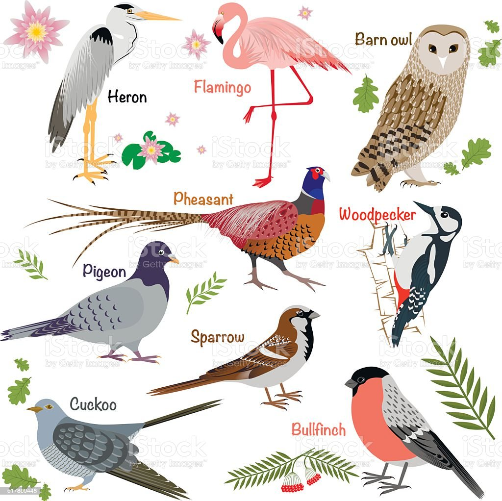 Realistic birds collection向量藝術插圖