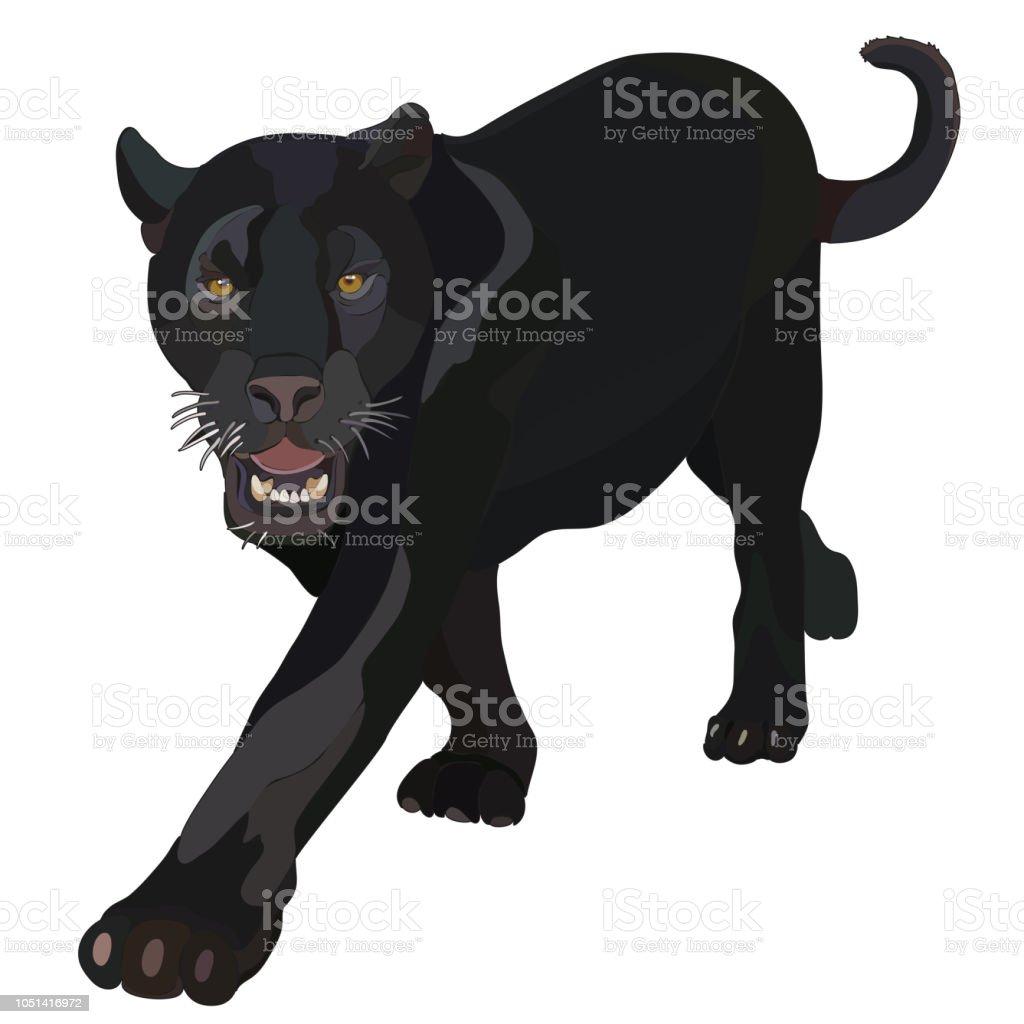 Realistische Black Panther Im Vektor Stock Vektor Art und mehr