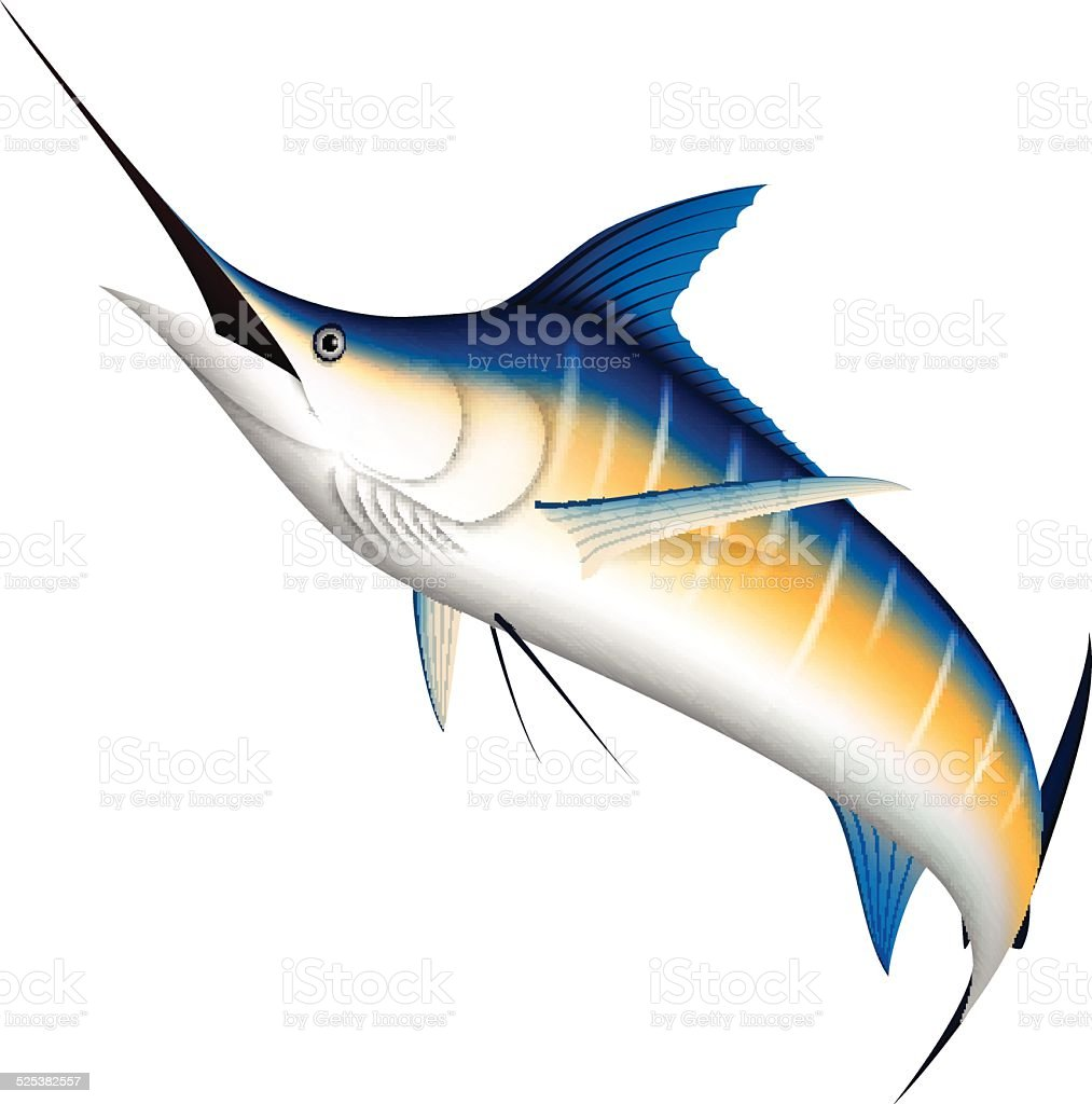 Realistic blue Marlin fish vector art illustration