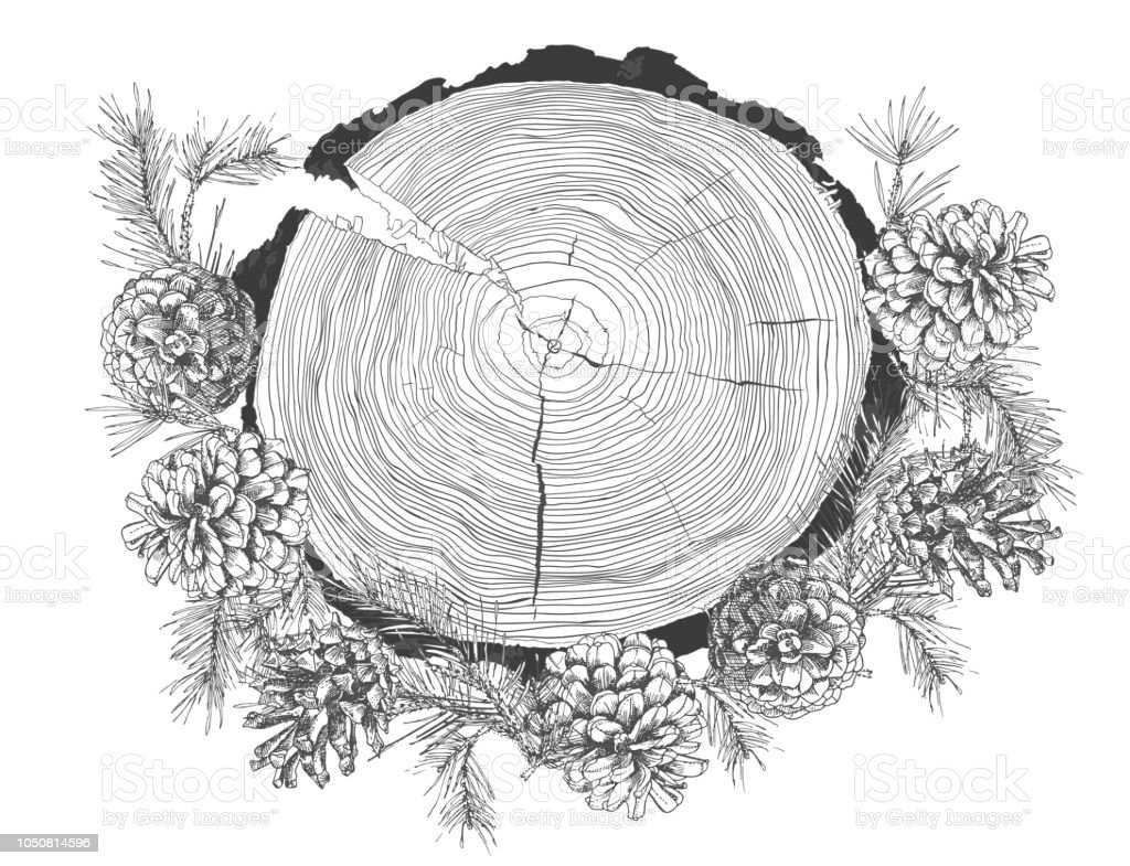 Realistic Botanical Ink Sketch Of Fir Tree Branches With Pine Cone